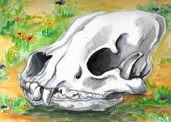 Hyena Skull by kookybat