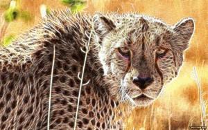 Cheetah by CmdrChaos