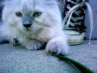 mr. blue eyes by wisewoman507