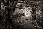 A walk in the forest by daaram