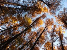 Tree crowns in the autumn sun by Kopczynski-Adam