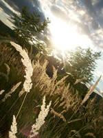 Sunlight by biencutza