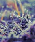 rainbow frost by likeubetterdead