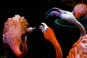 Flamingo 03 by btoum