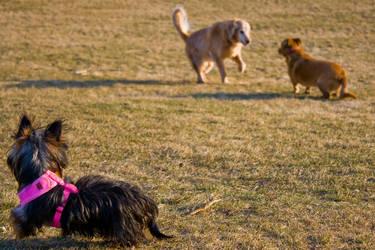 King's Park 07 by btoum