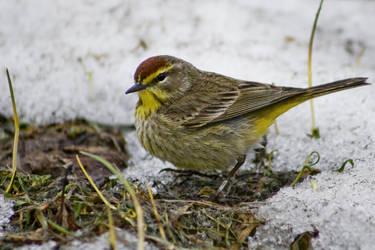 Little Bird by btoum