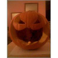 Bat-Symbol Pumpkin by Amara-Anon
