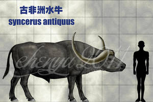 syncerus antiquus by sinammonite