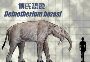 Deinotherium bozasi by sinammonite