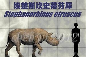 Stephanorhinus etruscus by sinammonite