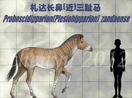 Proboscidipparion zandaense by sinammonite