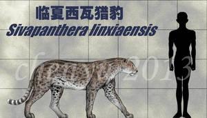 Sivapanthera linxiaensis by sinammonite
