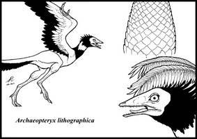 Archaeopteryx lithographica by zakafreakarama