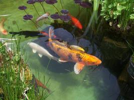 Goldfish by spunkymom