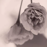 Missing you by yume-no-yukari-photo