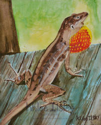 Brown Anole by Kilsley