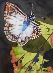 White Butterfly by Kilsley