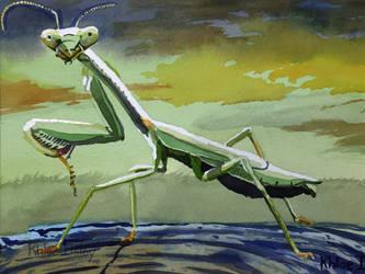 Praying Mantis by Kilsley