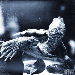 (Teenage Mutant Ninja) Turtle! by AndrewNickson