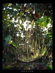 mellow: Spiderwebs by behindtime