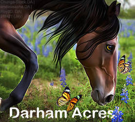 Darham avi by Horserider09