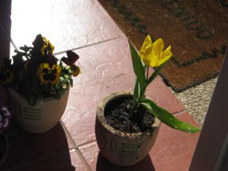 flor de entrada by smoked-cl
