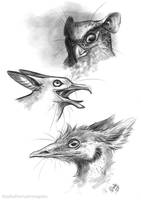 Griffin sketches by Key-Feathers