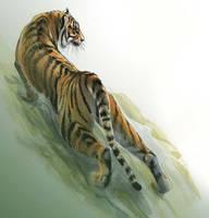 Sumatran tiger by Emushi