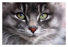 CAT by angelbabiau