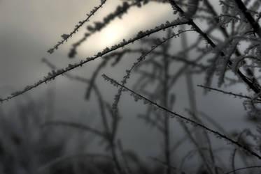 Frozen Afternoon by angelbabiau