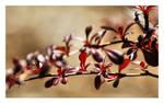 Spring Zen by angelbabiau