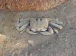Badu Crab 2 by angelbabiau