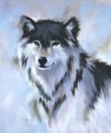 wolf by blackrose95
