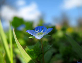 Blue Flower by Swamp-art