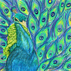 Peacock by pepsirat