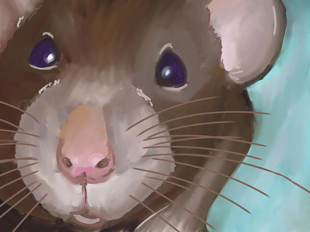 Rat by pepsirat