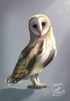 Owl by ClassyBear