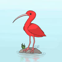 Scarlet Ibis  by ElmTheSnivy