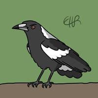 Australian Magpie by ElmTheSnivy