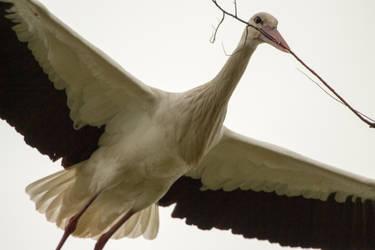 Stork by Little-Vampire