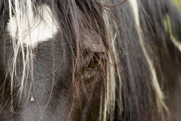 Black horse portrait by Little-Vampire