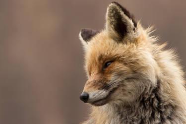 The fox secret by Little-Vampire