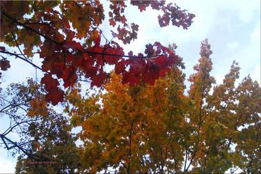 Autumn Already Near 11 by vytra
