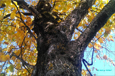 Tree At The Autumn by vytra