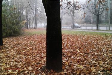 Autumn Mist by vytra