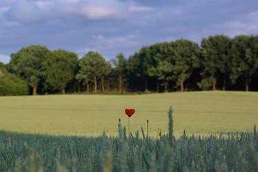 flower on a field by MeStillInWonderland