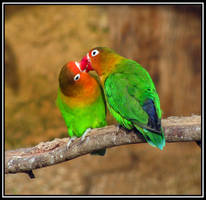 :: love is everywhere i go 2:: by HarisDrako