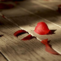 ::  falling leaves ... :: by HarisDrako