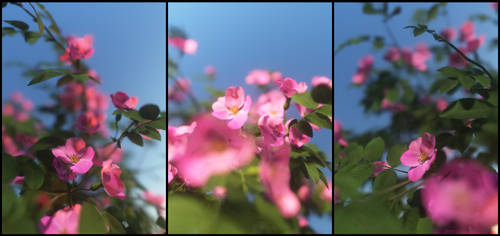 Just Flowers by sethlebatard
