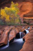 Desert Paradise by michaelanderson